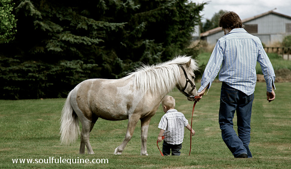 7 Quotes That Will Impact Your Life With Horses – and Why ...