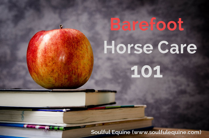 Barefoot Horse Care 101 by Soulful Equine