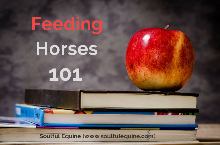 Feeding a Horse 101 by Soulful Equine