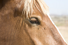 Fly Control For Horses, A Non-Toxic Program