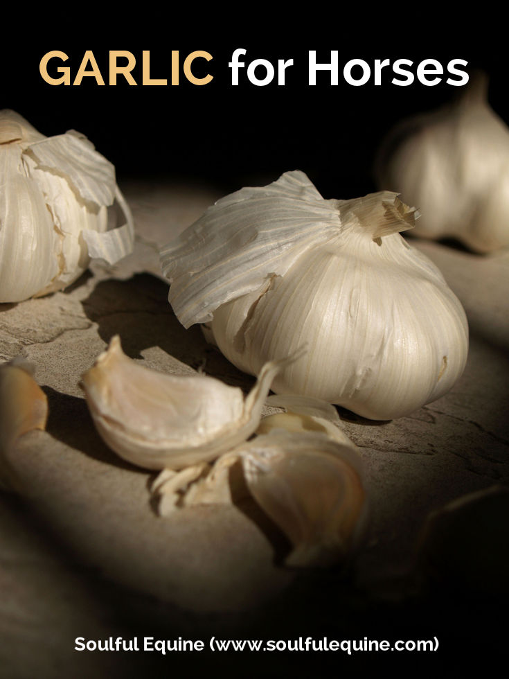 Garlic for Horses And Fly Control