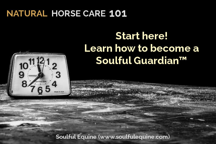 Natural Horse Care 101 by Soulful Equine