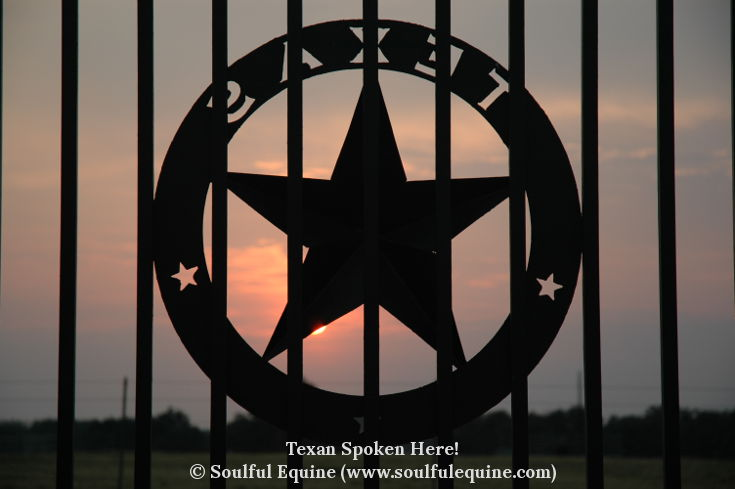 Soulful Equine - Texan Spoken Here