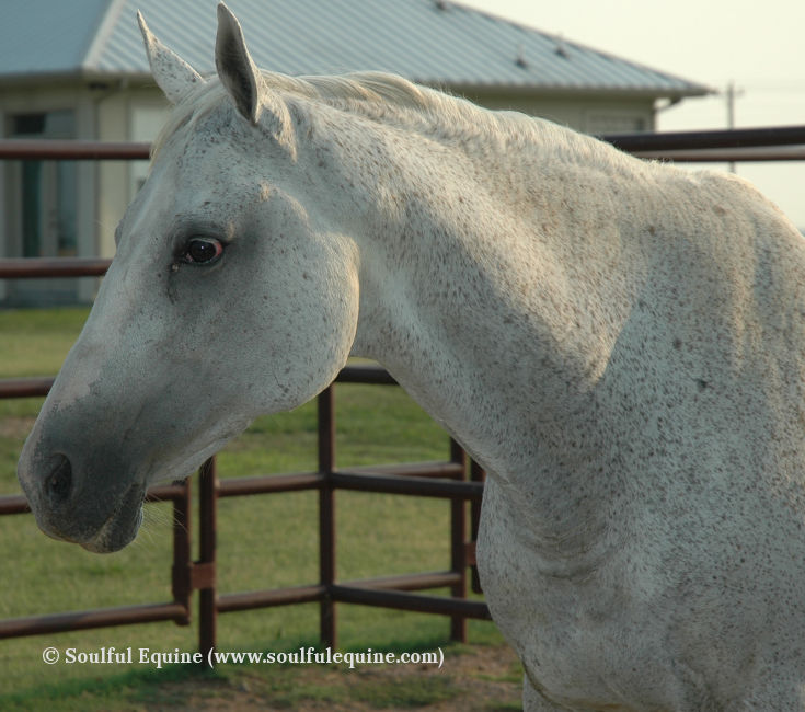 The horses of Soulful Equine
